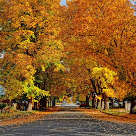 Coeur d'alene, Idaho by Barbara Brock - City,  Street & Park  Neighborhoods ( idaho small town, autumn leaves, american small town, fall trees )