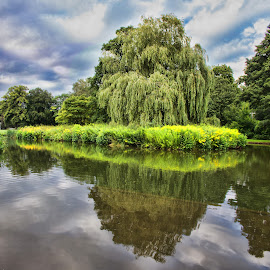 Willow reflecting in lake by Gianluca Presto - Nature Up Close Trees & Bushes ( water, reflection, water reflection, sky, nature, park, sallow, green, silence, lake, quiet, willow, landscape )