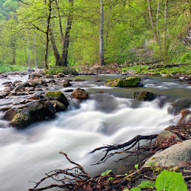 by Siniša Almaši - Landscapes Waterscapes ( water, stream, green, stone, forest, rock, landscape, spring, woods, nature, tree, color, view, light, river )