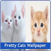 Free Download Pretty Cats Wallpaper APK for Samsung
