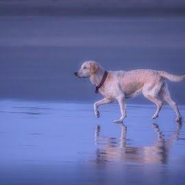 Beach Run by Pramod Nikam - Animals - Dogs Running ( utroda beach, goa, sea, run, dog )