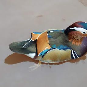 by Di Fone - Animals Birds