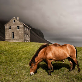 Contrary  by Þorsteinn H. Ingibergsson - Buildings & Architecture Decaying & Abandoned ( farm, iceland, nature, horse, structor, landscape, abandoned )