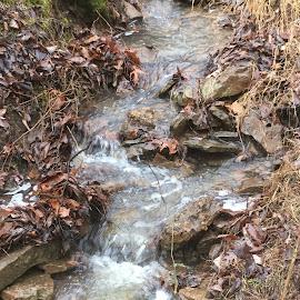 Creek by Amanda Burton - Nature Up Close Water ( water, nature, creeks, landscape )