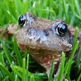 The Frogman by Gert de Vos - Animals Other