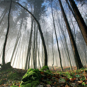 morning glory by Gregor Znidarsic - Landscapes Forests ( tree, forest, sun light,  )