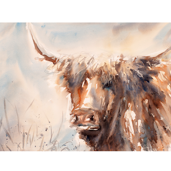 Highland cow painting art watercolour original