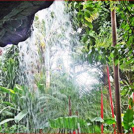 Tropical Garden by Sandy Stevens Krassinger - Nature Up Close Gardens & Produce ( waterfall, glass, nature up close, landscape, tropical garden,  )