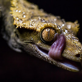 by Jenna Taylor - Animals Reptiles (  )
