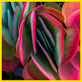 Colors in Nature  by Janet Aguila Krause - Instagram & Mobile iPhone ( plant, succulent )