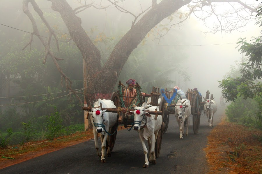 The morning fog by Kishore Korasala - Transportation Other