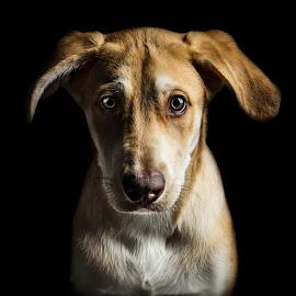 My name is Teddy by Jukka Pinonummi - Animals - Dogs Portraits ( low key, beautiful, dog portrait, low light, puppy, cute, dog, canon eos, puppy portrait, portrait, eyes, animal )