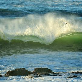 Splashing Wave by Lori Pagel - Landscapes Waterscapes ( water, wind, oregon, splash, green, sea, ocean, rock, coastal, coast, nature, outdoors, wave, wet, evening light, evening, light, rocks, foam )
