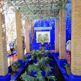 Jardin Majorelle Morroco by Carmen Kovacs - City,  Street & Park  City Parks