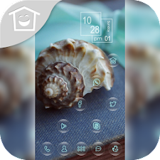 Beautiful exotic conch theme
