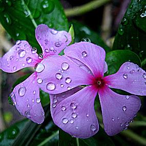 noyontora by Raj Mushahary - Nature Up Close Flowers - 2011-2013