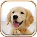 App Cute Puppies Live Wallpaper APK for Kindle