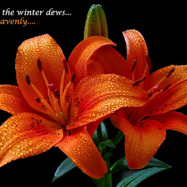 Enjoy the winter dews... by Asif Bora - Typography Quotes & Sentences