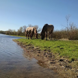 More horses by Bruce Davis - Animals Horses ( relax, tranquil, relaxing, tranquility )