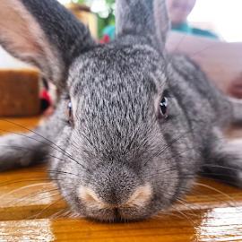 by Cosmin Lucian Alba - Instagram & Mobile Android ( lovely, little, rabbit )
