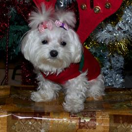 merry christmas with my smal dog by LADOCKi Elvira - Public Holidays Christmas ( glowing decorations, holiday, christmas decorations, santa claus, glowing balls, christmas, christmas tree, decorations, christmas balls, merry christmas )