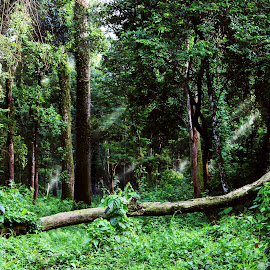 Fallen by Mrinmoy Ghosh - Landscapes Forests (  )
