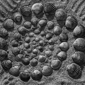 Sea Shells. Desert Beach. Faro. Portugal 2016 by João Ferreira - Black & White Objects & Still Life ( portugal, faro )