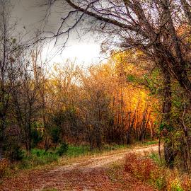 by Karen McKenzie McAdoo - Landscapes Forests