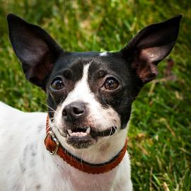 Melia by Myra Brizendine Wilson - Animals - Dogs Portraits ( canine, dogs, dog, melia )