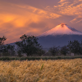 Field and Volcano in the morning by Cristobal Garciaferro Rubio - Landscapes Prairies, Meadows & Fields ( field, volcano, popo, popocatepetl, volcanoes, sunrise, morning )