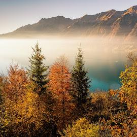 Autumn Mood at Brienzersee (Switzerland) by Franz Engels - Landscapes Travel ( fog, autumn, brienzersee, landscape photography, berner oberland, moody, landscape, landschaftsfotografie, bernese oberland, griessbach, golden, mist )