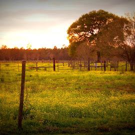 yellow flowers by Brenda Shoemake - Landscapes Prairies, Meadows & Fields