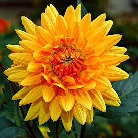 Etoile by Gérard CHATENET - Flowers Single Flower