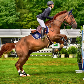 Extending for Jump by Marco Bertamé - Sports & Fitness Other Sports ( 1, green, obstacle, horse, equestrian event, csi jumping, brown, number, roeser, jump, luxembourg )
