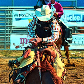 Ride 'em Cowboy... by Rob Bradshaw - Sports & Fitness Rodeo/Bull Riding ( bucking bronco, horse riding, ride 'em cowboy..., sports, rodeo, colorado, rifle, fair )