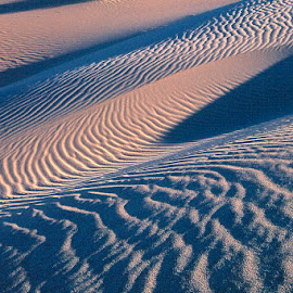 Rippling dunes with creosote bush. by Gale Perry - Landscapes Deserts ( death valley, vertical, dunes, creosote bush, angled dunes, light and shadow )