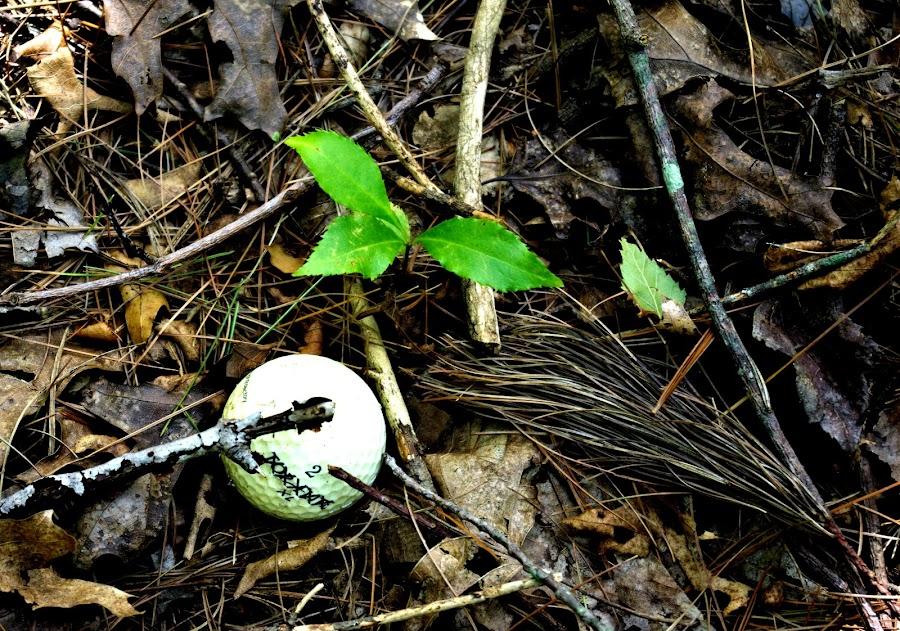 Found It !!! by Martin Stepalavich - Sports & Fitness Golf