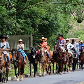pilgrimage to Aparecida SP in Sto Antonio do Pinhal SP Brazil by Marcello Toldi - Animals Horses