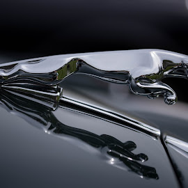 Jag by Paul Coomber - Transportation Automobiles ( abstract, jaguar, emblems, reflection, cars )