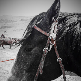 by Crystal L. Morgan - Animals Horses ( pics from tablet )