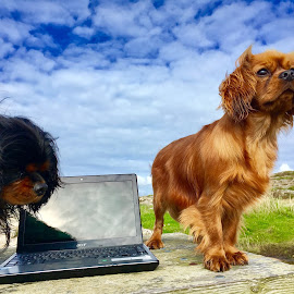 Working By the Sea by Camilla Uddgren - Animals - Dogs Portraits