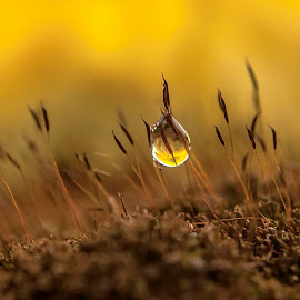 . by ERFAN AFIAT SENTOSA - Nature Up Close Natural Waterdrops