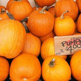 Pumpkins  by Nina Nabieva - Food & Drink Fruits & Vegetables