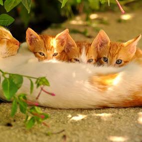by Booba Booba - Animals - Cats Portraits ( cat, pet, feeding, animal )