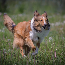 by Rick W - Animals - Dogs Running