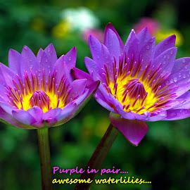 Purple....  by Asif Bora - Typography Quotes & Sentences