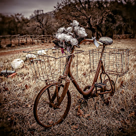 Rusty by Andre Oelofse - Transportation Bicycles