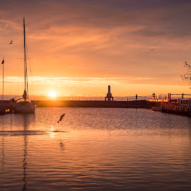Morning Catch by James Meyer - Landscapes Waterscapes ( harbor, fish, salmon, marina, sunrise, seascape )