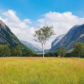 by Anngunn Dårflot - Landscapes Mountains & Hills