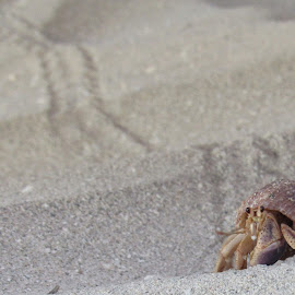 Mr Crab journey by Paul Popovici - Animals Sea Creatures